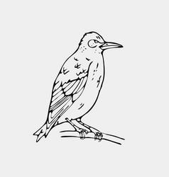 hand-drawn pencil graphics small bird starling vector image