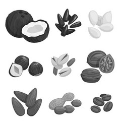 nuts grain and nut seeds icons vector image