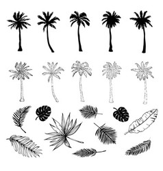 set of silhouettes of palm trees of different vector image