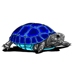 tropical turtle icon cartoon tropical turtle vector image