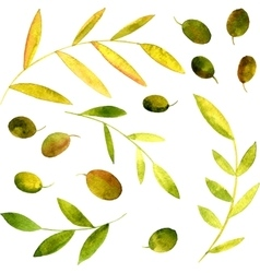 Watercolor olives leaves and branches vector