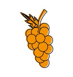 fresh grapes fruit vector image