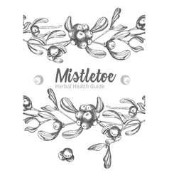 set of hand drawn botanical sketch mistletoe vector image