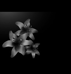 silver lily flowers isolated on black backdrop vector image
