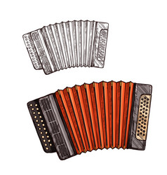 Sketch accordion musical instrument vector