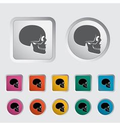 anatomy skull vector image