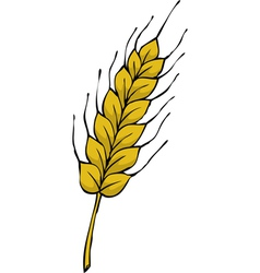 ear of wheat vector image vector image