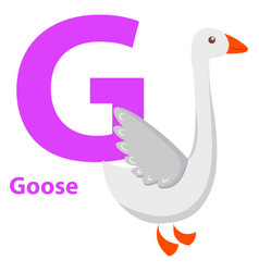white goose with purple character g on abc card vector image vector image