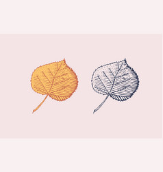 autumn leaves or herb rustic decorative poplar vector image