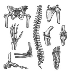bone and joint sketches set for medicine design vector image