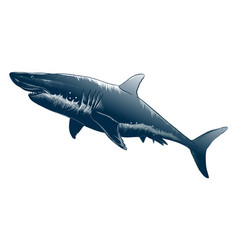 drawing shark in black color isolated vector image
