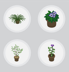 Isometric plant set of fern flowerpot plant and vector