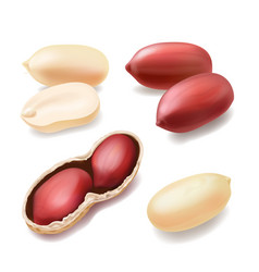 peanuts in shell realistic nut icon vector image