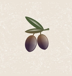 Ripe olives leaves engraving vector