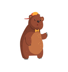 teen bear standing isolated on white cartoon vector image