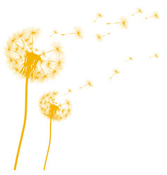 silhouette of a dandelion on a white background vector image vector image