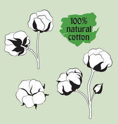 cotton set natural material sign drawing flower vector image vector image