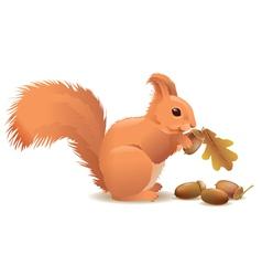 Squirrel with acorns vector image vector image