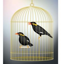 Caged myna birds vector