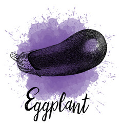 Eggplant depicted in hand drawn graphics vector