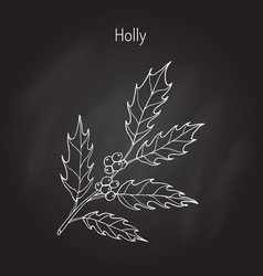 Holly tree branch vector