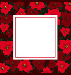 red poinsettia on red banner card vector image