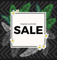 summer sale with tropical palm leaves and white vector image vector image