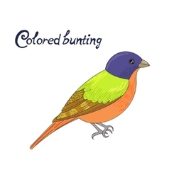 Bird colored bunting vector