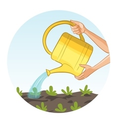 Hands watering a bed in garden with can vector