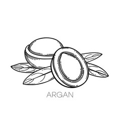 Two graphic argan fruits decorated with leaves vector