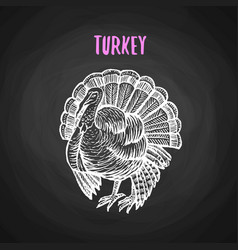 bird turkey in chalk style on blackboard vector image