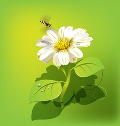 Bee flying to white flower vector