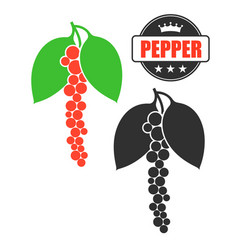 black pepper vector image