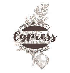 Cypress plant spice and herbs isolated icon with vector