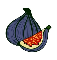 Hand drawn figs Eco food vector