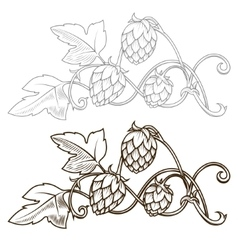 Hops ornament vector