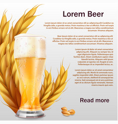 realistic beer glass with ears of cereals vector image