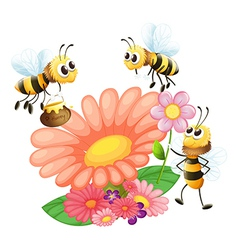 Blooming flowers with bees vector