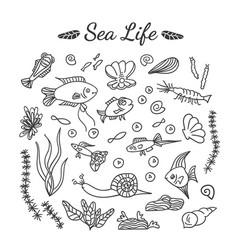 drawing aquarium fish set vector image