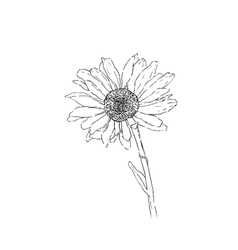 Flower line art monochrome vector image