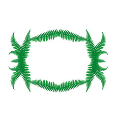 frame of fern leaves vector image