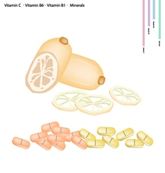 Lotus Roots with Vitamin C B6 and B1 vector