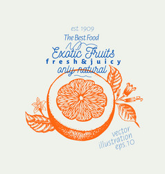 orange hand drawn fruit vector image