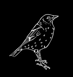 Hand-drawn pencil graphics small bird engraving vector