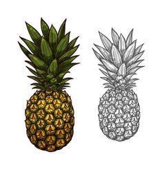 pineapple tropical fruit sketch for food design vector image