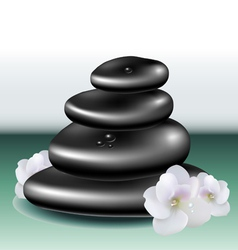 Spa stone set with white flower vector image vector image