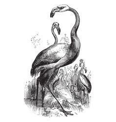 American flamingo vintage vector