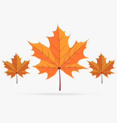 autumn orange maple leaf fall isolated on white vector image