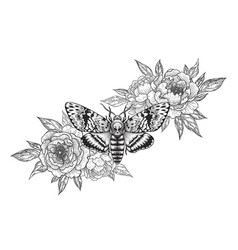 Deaths-head hawk moth with peonies vector
