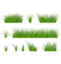 fragment of a beautiful green grass isolated on a vector image